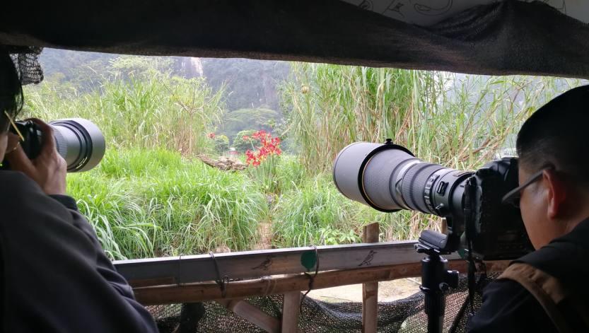 2021年3月崇左打鸟拍猴、德天瀑布、漓江龙脊专业摄影团 (2)